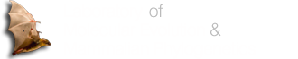 Laboratory of Molecular Evolution and Mammalian Phylogenetics | BatLab